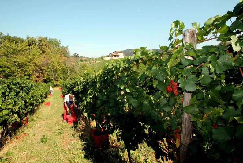Vigneti e Cantina Prime Alture Winery